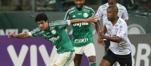 Figueirense x Palmeiras: assista ao jogo ao vivo na TV
