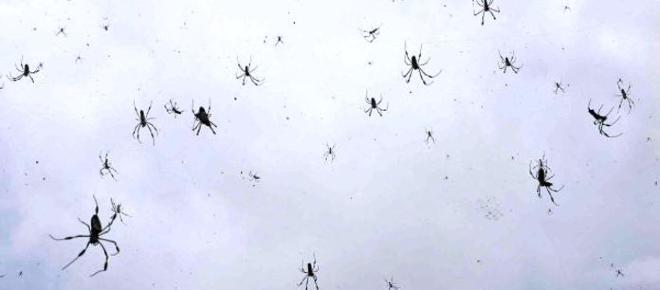 Previsão de chuva de... aranhas.