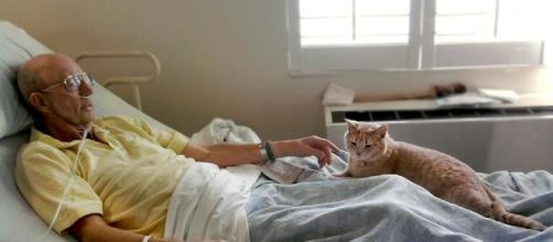 Hospice Cat Brings Comfort And Peace To Dying Veterans - The ... - kittencatpost.com