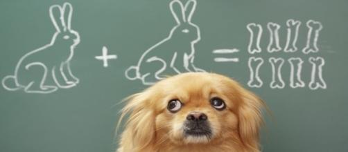 Faça o teste e descubra se você é bom na Matemática