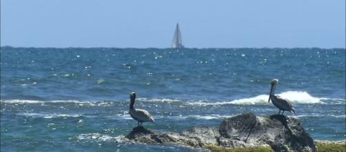 océano atlántico norte Stock Videos | océano atlántico norte Stock ... - framepool.com