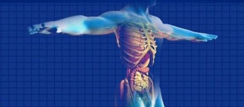 candida intestinale sintomi e dieta