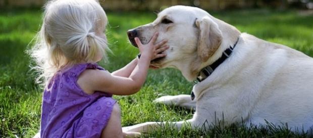4 motivos para manter o papo em dia com seu cachorro