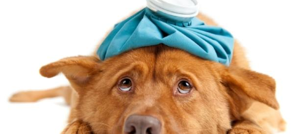Poulsbo Animal Clinic - Veterinarian In Poulsbo, WA USA :: Blog - poulsboanimalclinic.com