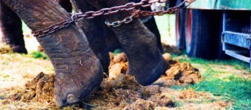 Abusi e maltrattamenti sugli animali del circo