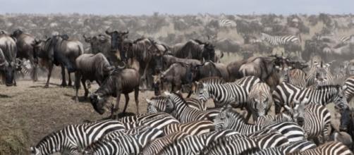Parque Nacional del Serengeti.