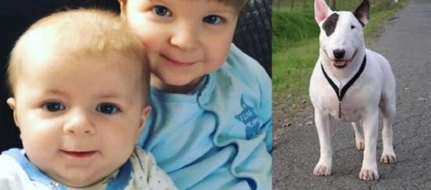 Bebê é atacado e morto por Bull Terrier e irmão segue internado, em estado grave