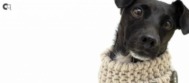 Cuide bem do seu PET durante o inverno (Foto: Reprodução)