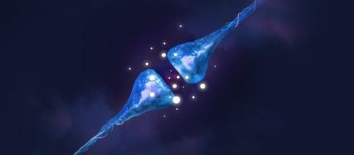Una nuova tecnica per visualizzare in 3D l'attività sinaptica è stata messa a punto dal MIT di Boston