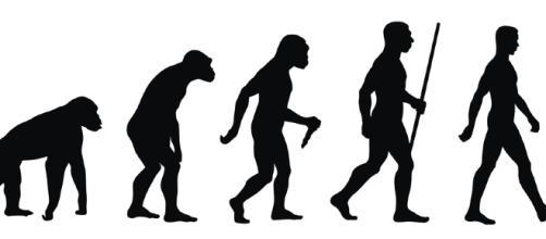 Esquema de la evolución humana