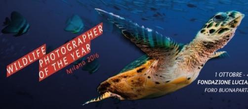 Locandina della mostra Wildlife Photographer of the Year 2016