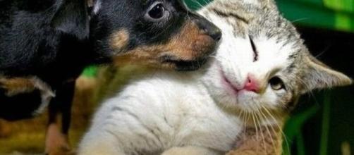 Cani e gatti possono ammalarsi di diabete