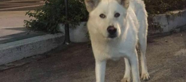 In marcia su Sangineto, il paese dove è stato ucciso il cane Angelo