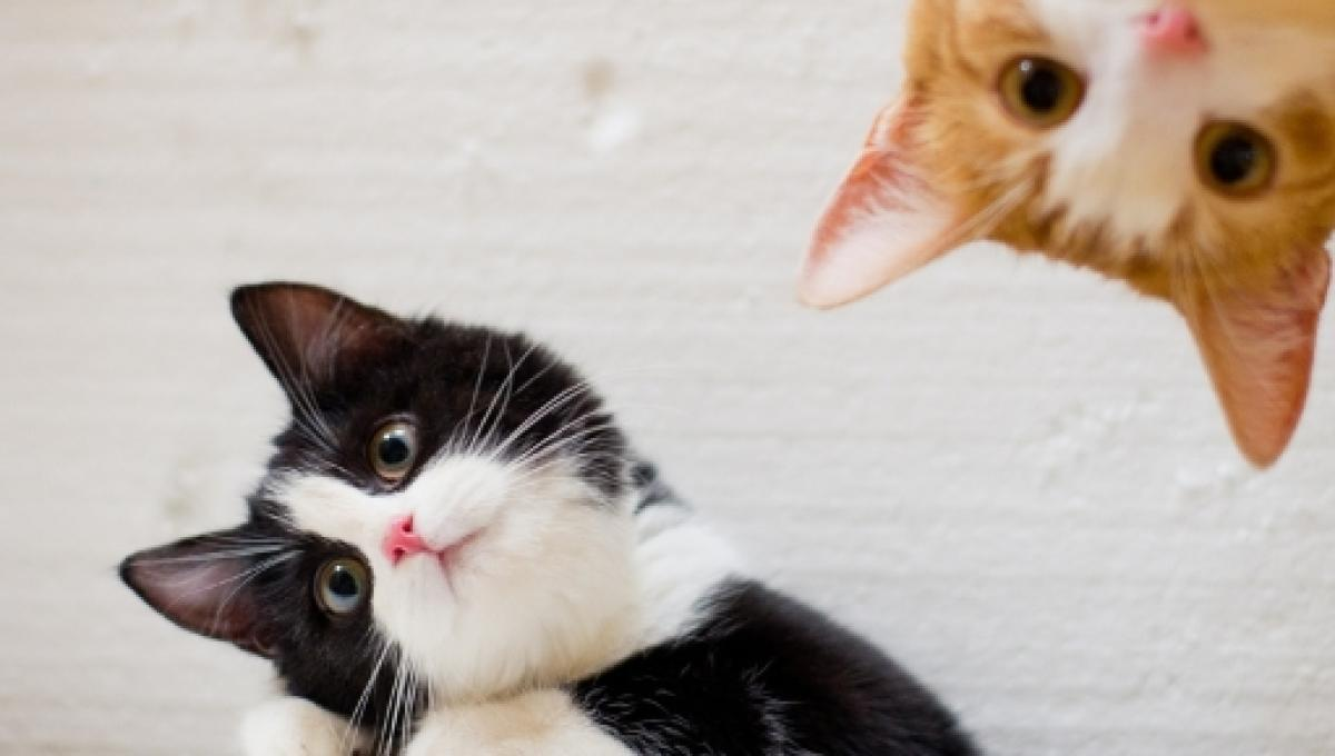 National Cat Day is here - celebrate with these funny cat videos from  around the nation