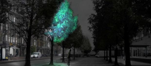 Dutch designer Daan Roosegaarde bio-luminescent bacteria found in nature to create glow-in-the-dark trees/ screencap Dezeen via Youtube