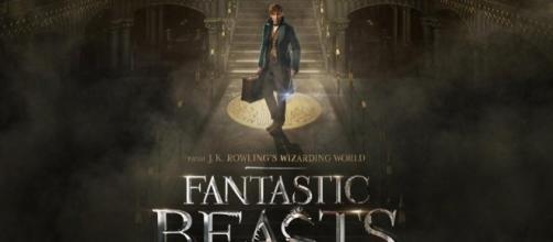 News Report Center : New 'Fantastic Beasts' Trailer Brings ... - newsreportcenter.com