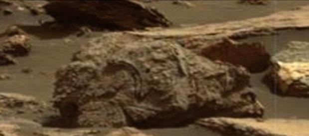Criatura petrificada intriga teóricos da vida alienígena (Paranormal Crucible/Youtube)