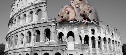 Emergenza topi al Foro romano: urge una soluzione - Youbee Magazine - youbee.it