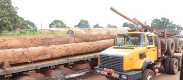 Timber being transported from Cameroon's South Region for exportation(c) Mbom Sixtus 2016