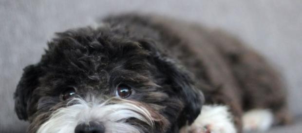 Realmente hay animales que se suicidan? - BBC Mundo - bbc.com