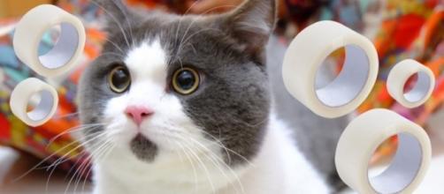 A reação dos gatos é bastante peculiar.