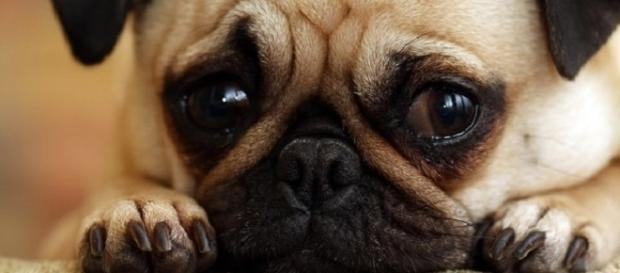 6 vezes que o seu parceiro canino disse 'eu te amo'