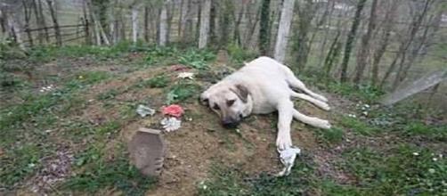 Cachorro que sentiu a morte do dono