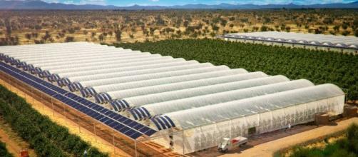 Futuristic Farm Grows Veggies in Desert - a Potential Solution to ... - techzimo.com