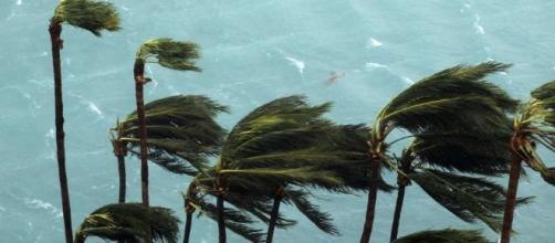 LSU at Florida game postponed as Hurricane Matthew nears - Houston ... - houstonchronicle.com