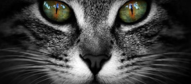 Cliente terá de indenizar veterinária por postagem no Facebook | Flickr - flickr.com