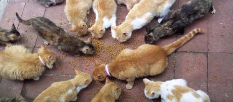 Feral cats can be a problem and dangerous for the animals by Scott Granneman