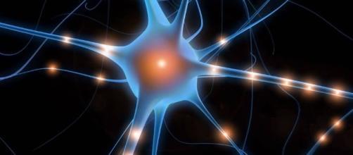 Neuroscienze: nuova scoperta sulla schizofrenia - unito.it