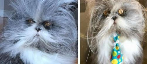 Este bichinho é um cachorro ou um gato?
