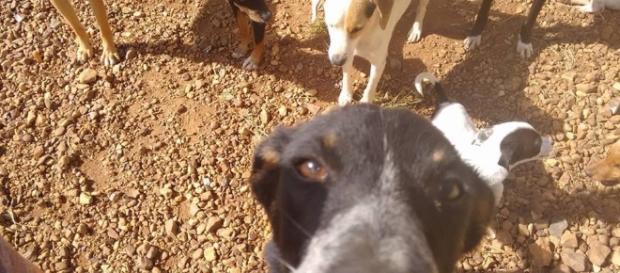 Ativista pede ajuda para comprar alimentos para animais do Centro de Zoonoses da Prefeitura de Avaré