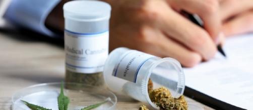 BNC. - Marijuana now legal in eight more US States while vendors ... - fedgeno.com