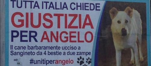 La petizione lanciata dopo i casi Angelo e Pilù