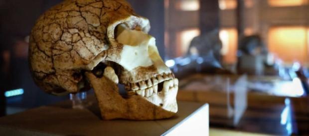 Homo Sapiens 2016 al Mudec con reperti rarissimi