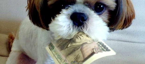Animali: Spunta la tassa comunale su cani e gatti