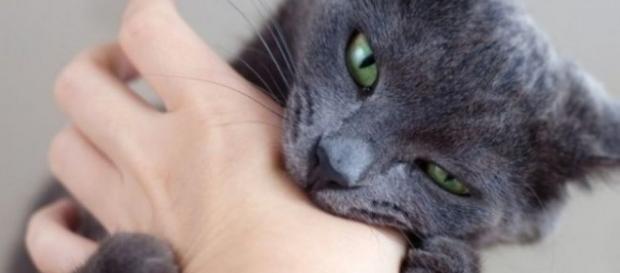 Mordidas de gato são mais perigosas quando atingem as mãos, devido à superficialidade das estruturas internas