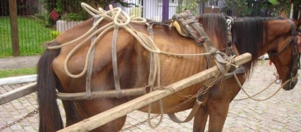 O cavalo foi atendido pela FAMA