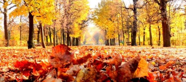 Herbst ist Leben, das in die Tiefe geht - Mirlime - mirlime.com