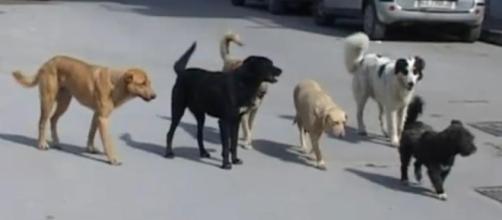 in arrivo dal PD la tassa sui cani non sterilizzati. Vediamo un po' di cosa si tratta