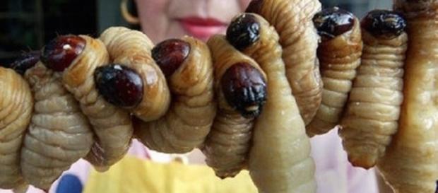 i vermi giapponesi usati in cucina nella loro tradizione