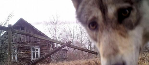 Chernobil: reserva natural y zona de exclusión radioactiva