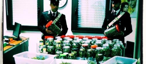 I nove chili di marijuana sequestrati dai Carabinieri.
