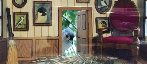Jada Fitch, e le sue casette per gli uccelli #5