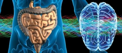 Un ulteriore tassello nel legame tra sistema nervoso e digerente