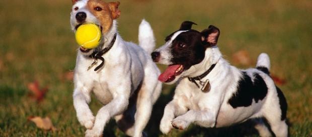Con la legge di bilancio 2017 arriverà anche tassa sui cani? - lifegate.it