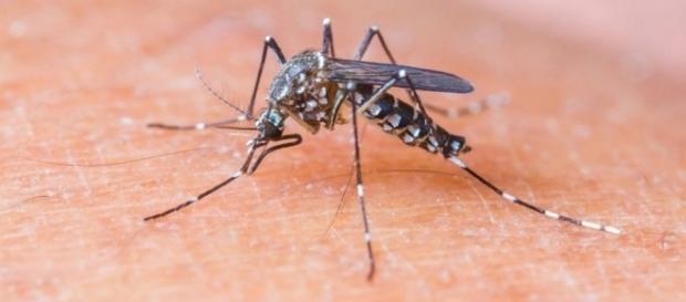 OMS declara fim da emergência internacional em saúde pública causada pela zika