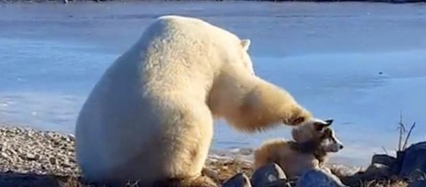 Polar Bear pets a dog in rare encounter caught on video: Photo: Blasting News Library - rover.com